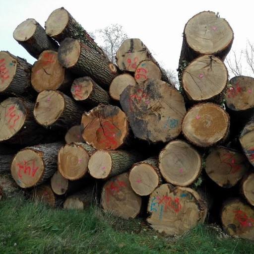 gỗ giáng hương giá bao nhiêu