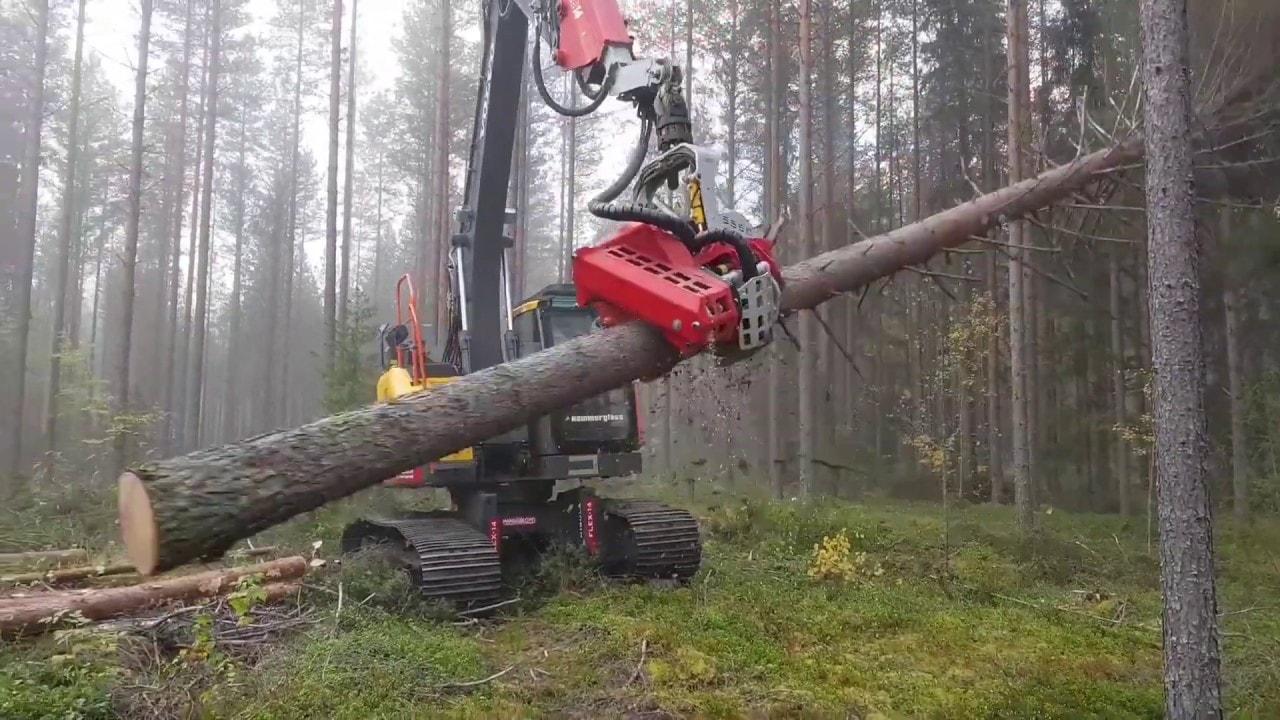 sơ đồ quy trình ép gỗ xuất