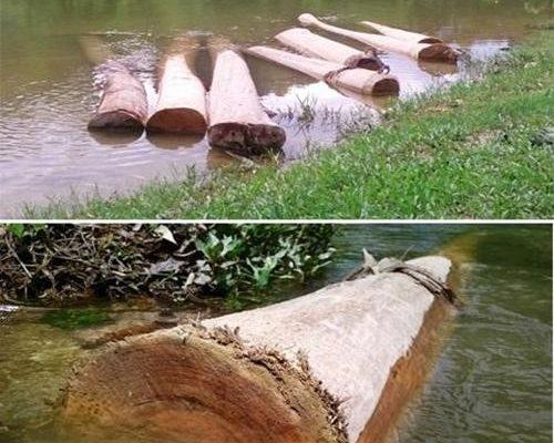 cách ngâm gỗ chống mối mọt
