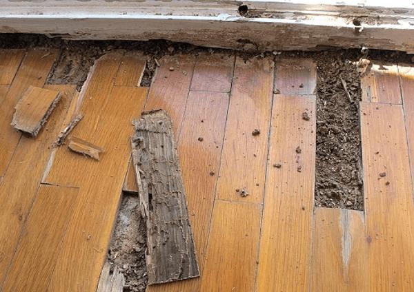 cách xử lý gỗ chống mối mọt