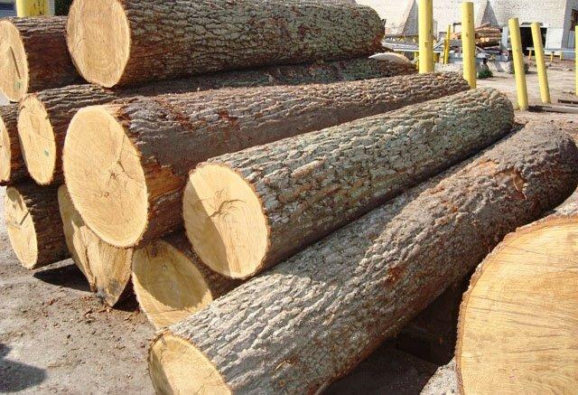 phân loại nhóm gỗ tại việt nam