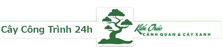 giám đốc công ty cây xanh hà nội