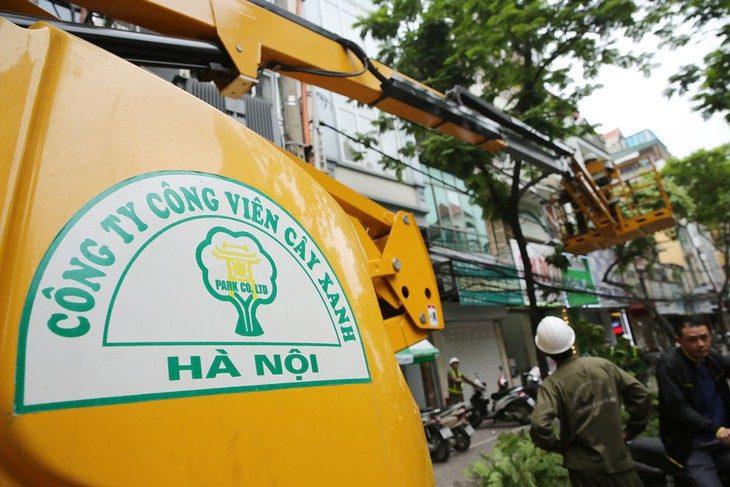 công ty cây xanh tại hà nội